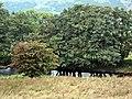 River Stinchar near Clashgalloch - geograph.org.uk - 333934.jpg
