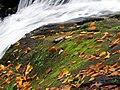 Roaring Fork Falls Black Mountain Campground Pisgah Nat Forest NC 4371 (24096578118).jpg