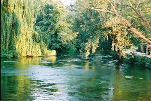 River Test - The Test downstream of Sadler's Mill, Romsey
