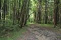 Rosaryville State Park 0071.jpg