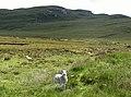 Rough grazing near Liurbost - geograph.org.uk - 498977.jpg