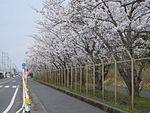 Route 269 ja Kanoya Imasaka 2015.JPG