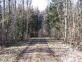 Route forestière Plan Bois 29.02.2012.jpg