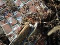 Rubble from A. K. Williams General Store, Ijamsville, MD.jpg