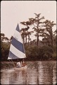SAILING IN MANDEVILLE HARBOR - NARA - 544224.tif