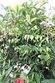 SZ 深圳 Shenzhen 南山區 Nanshan 蛇口體育中心 Shekou Sports Center Sept 2017 IX1 white flowers 31.jpg