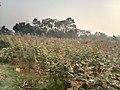 Sadullapur Flower Garden in 2020.07.jpg