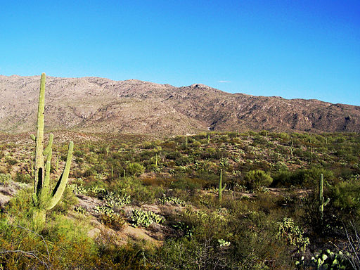 Saguaro National Park East