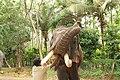 Sakrebailu elephant camp 4.jpg