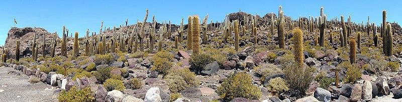 Salar de Uyuni Décembre 2007 - Cactus.jpg
