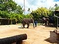 "Samui 2013 May ""Island Safari"" - panoramio (5).jpg"