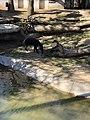 San Diego Zoo 7 2019-04-16.jpg