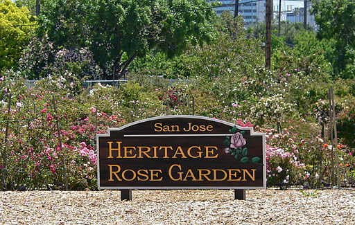 San Jose Heritage Rose Garden view 1