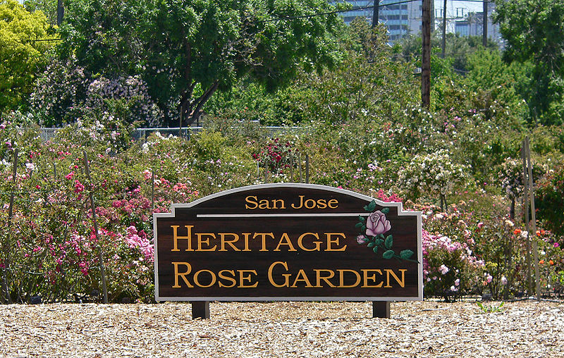 File:San Jose Heritage Rose Garden view 1.jpg
