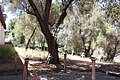 San Juan Bautista, CA USA - Old Mission SJB, Mission SJB - Indians, Spanish and Pioneer Cemetery - panoramio.jpg