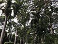 Scenic trees.jpg