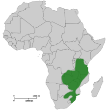 Map of Africa showing highlighted range covering much of eastern Africa from Tanzania to South Africa.