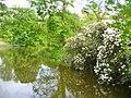 Schlosspark Wiesenburg - Teich (Wiesenburg Palace Park - Pond) - geo.hlipp.de - 36408.jpg