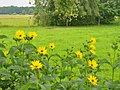 Schlunkendorf - Wiese (Meadow) - geo.hlipp.de - 39190.jpg