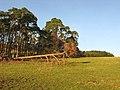 Scots Pine shelter belt - geograph.org.uk - 638974.jpg