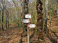 Segnali sentieri boschivi Brinzio (Passo Varrò - Monte Legnone).JPG