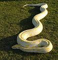 Serpiente de Birmania.jpg