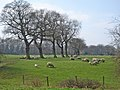 Sheep and lambs near Litley Farm - geograph.org.uk - 394248.jpg