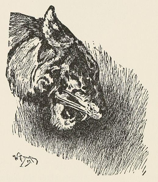 Why Is Bagheera A Black Cat
