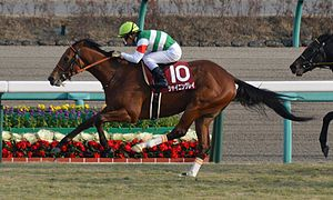 Shining-Lei Hopeful-Stakes 2014.jpg