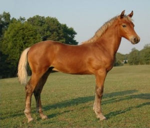 Yearling (horse) - A yearling