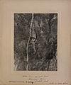 Silver vein, Coniagas Mine, Cobalt (HS85-10-23569).jpg