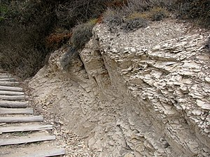 Sisquoc Formation - Sisquoc Formation at the stairs to More Mesa Beach, Santa Barbara, California