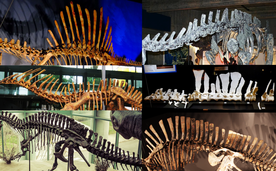 Six neural spine sails in Dinosauria