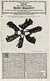 Six rats dont les queues étaient attachées ensemble qui furent trouvés à Strasbourg dans une cave le 14 juillet 1683.jpg