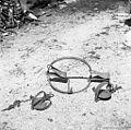 Skobci- pasti za lisico, jazbeca, kuno, Mrzli Log 1959.jpg