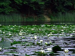 Small lake, Dognecea commune, Caras Severin County, Romania.JPG
