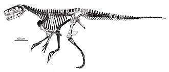 Smok (archosaur) - Skeletal restoration showing known remains.