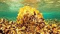 Snorkeling Lac Bay, Bonaire (12842228724).jpg