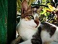 So Affectionate Cat.jpg