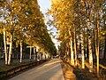 Sovetskaya Gavan - Lenina street.JPG