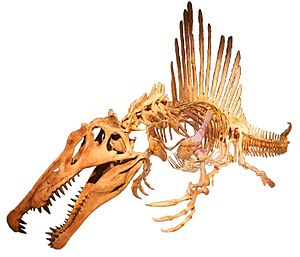 Spinosaurus swimming white background.jpg