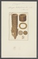 Spongia tubaeformis - - Print - Iconographia Zoologica - Special Collections University of Amsterdam - UBAINV0274 112 04 0003.tif