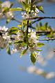 Spring (5606255337).jpg