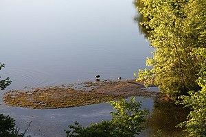 Spy Pond - Spy Pond sandbar