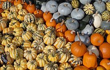 Various sizes, shapes, and colors of Cucurbita