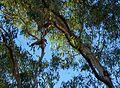 St George QLD 4487, Australia - panoramio - Vinko Rajic.jpg