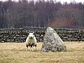 Standing stone in a field - geograph.org.uk - 117022.jpg