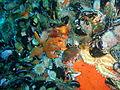 Starfish, urchins and mussels at 18m depth at SURG Pinnacles PB248850.JPG