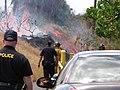 Starr-090709-2500-Thespesia populnea-habit with brush fire-Puamana-Maui (24672697430).jpg