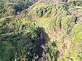 Starr-141014-2199-Caesalpinia decapetala-aerial view-Kakipi Gulch Haiku-Maui (25128943832).jpg